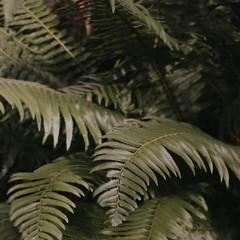 Foto 6 de 14 de la galería fondos-de-naturaleza-1 en Xataka Android