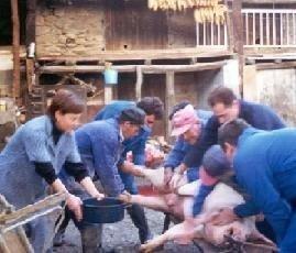 La matanza del cerdo
