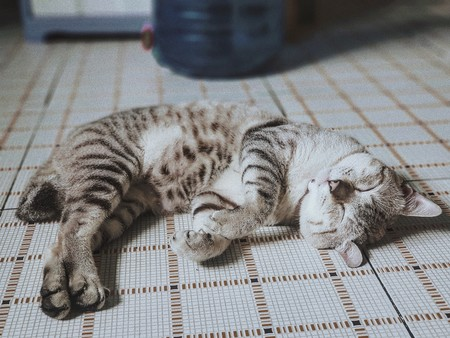 Si tienes dudas, consúltalo con la almohada: la siesta nos ayuda a procesar información para tomar mejores decisiones