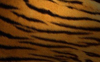 Fondos Tiger: completa tu deskmod