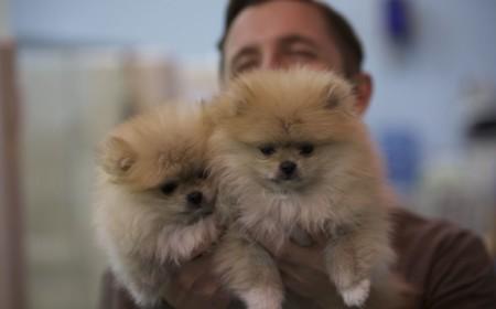 La clonación de perros es una realidad, pero solo es el comienzo