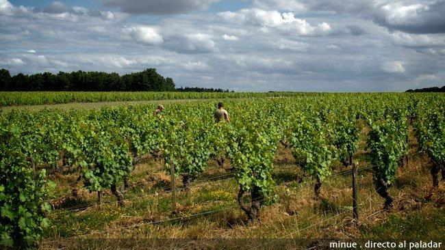 Enoturismo en el valle del Loira - las regiones