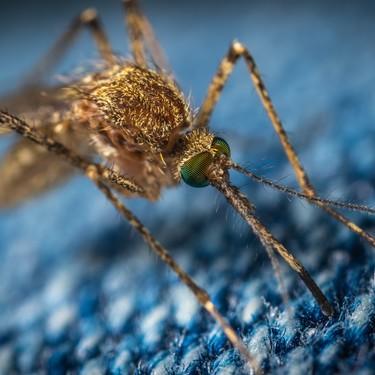 Cada dos minutos, la malaria mata a un niño menor de cinco años: por fin tenemos evidencias de que se puede acabar con ella
