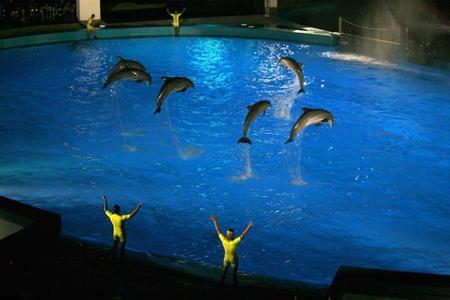 Si compras tu entrada para las Noches del Oceanogràfic de Valencia, podrás asistir al espectáculo CHANGE