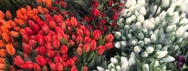 Este tiempo primaveral nos hace ser muy conscientes: comienza la carrera hacia la Pascua. ISDIN nos lo recuerda con sus novedades en fotoprotectores