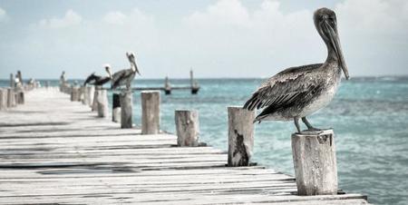 Tras Lytro, llega Pelican Imaging