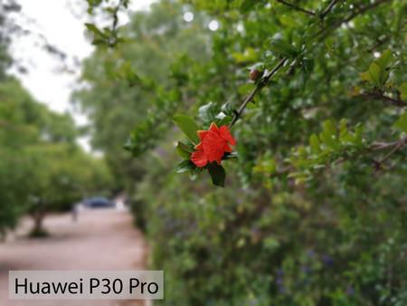 Huawei P30 Pro Retrato 03