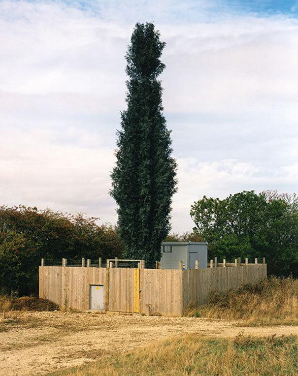 torre telefonía arbol