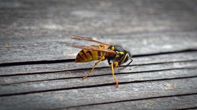 Wasp 1636895 960 720