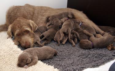 Si te pide mucho el pecho piensa que podría ser peor: ¡mira este vídeo de 10 perritos mamando!