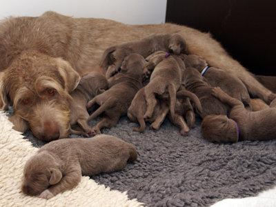 Si te pide mucho el pecho piensa que podría ser peor: ¡mira estos 10 perritos mamando!