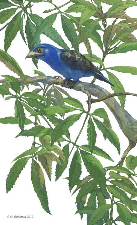 Ilustración de Michael Rothmanpainted usando el YInMn Blue.
