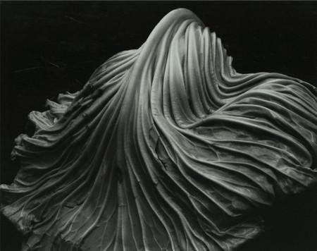 Edward Weston Foto2