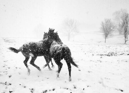 Alessandra Manzotti Horse Play Black White Iphone5c Italy