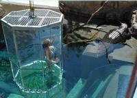 Nadar con cocodrilos en Australia