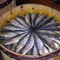 De cómo los pedos de los peces casi ocasionan un accidente diplomático pero fundaron la ciudad más liberal del mundo