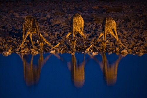 Guía de fotografía de fauna salvaje: esto es lo que nos recomiendan algunos de los mejores fotógrafos