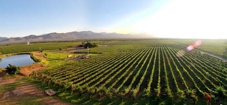 Enoturismo en Latinoamérica: vinos de Venezuela