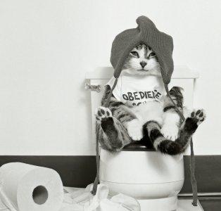 Los gatos estreñidos o el comienzo del 'estrés'