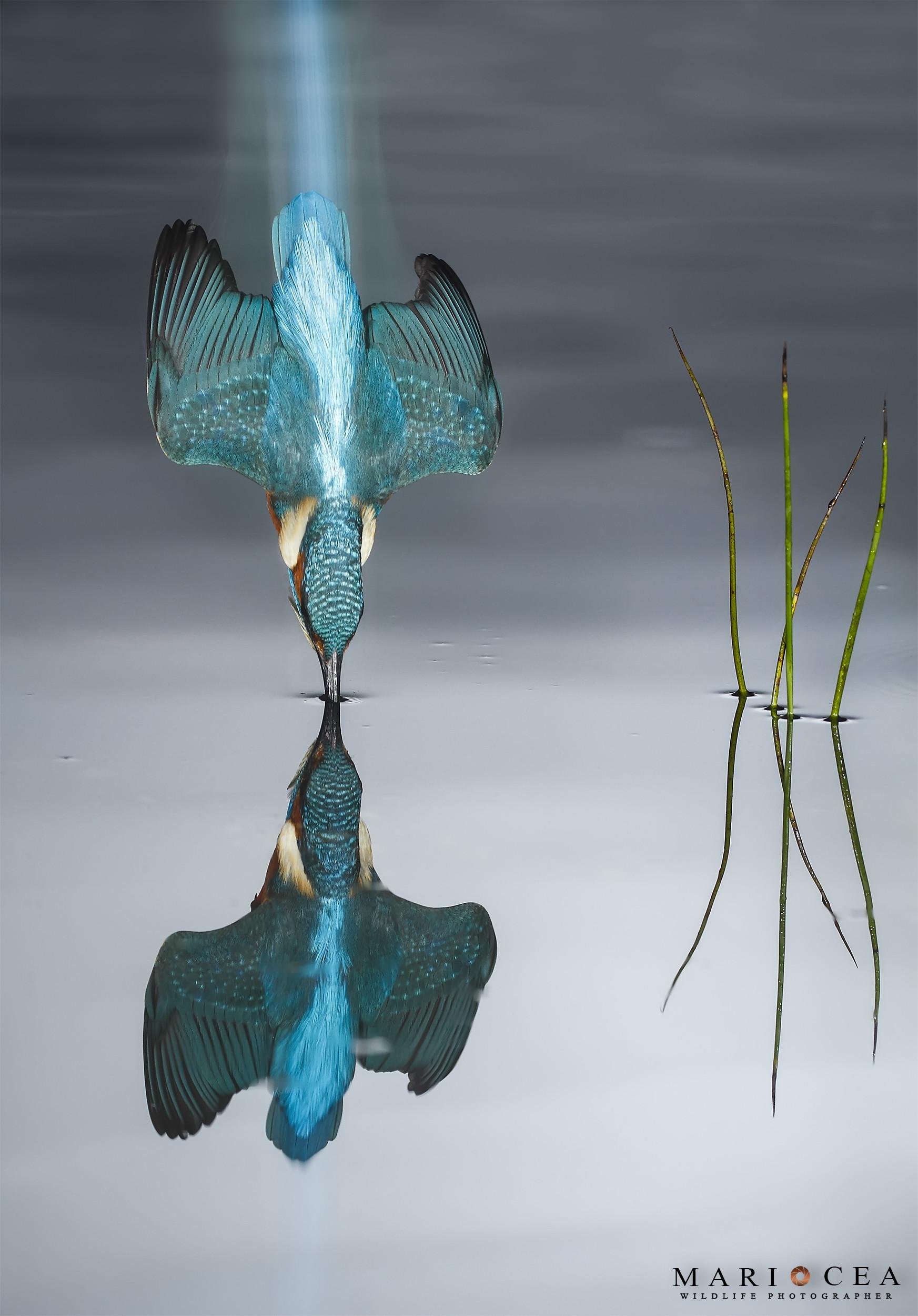 Foto de Fotografías de naturaleza tomadas por Mario Cea (1/12)