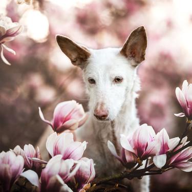 Estas son las enternecedoras fotos de perros que han vencido en el concurso Dog Photographer of the Year 2019