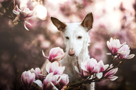 Estas son las enternecedoras fotos de perros que han vencido en el concurso Dog Photographer of the Year 2019