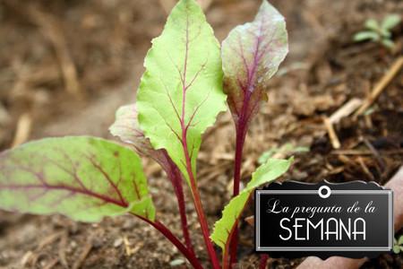 ¿Consumes habitualmente productos ecológicos? La pregunta de la semana