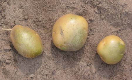 Patatas Verdes