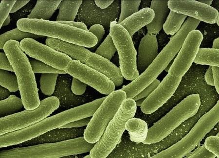 """El metano de la atmósfera podría ser """"eliminado"""" por una bacteria"""