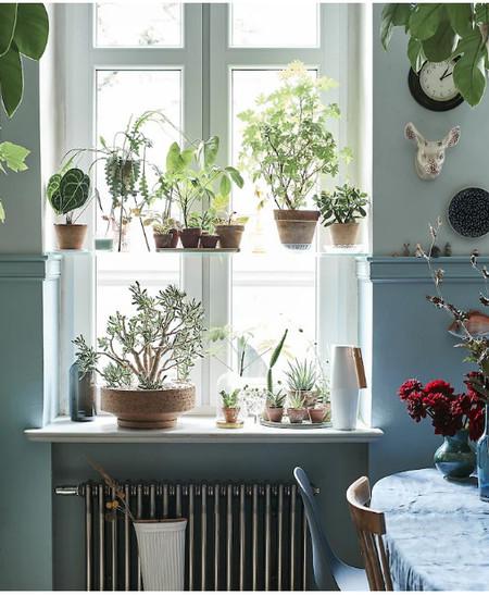 Muchas Plantas