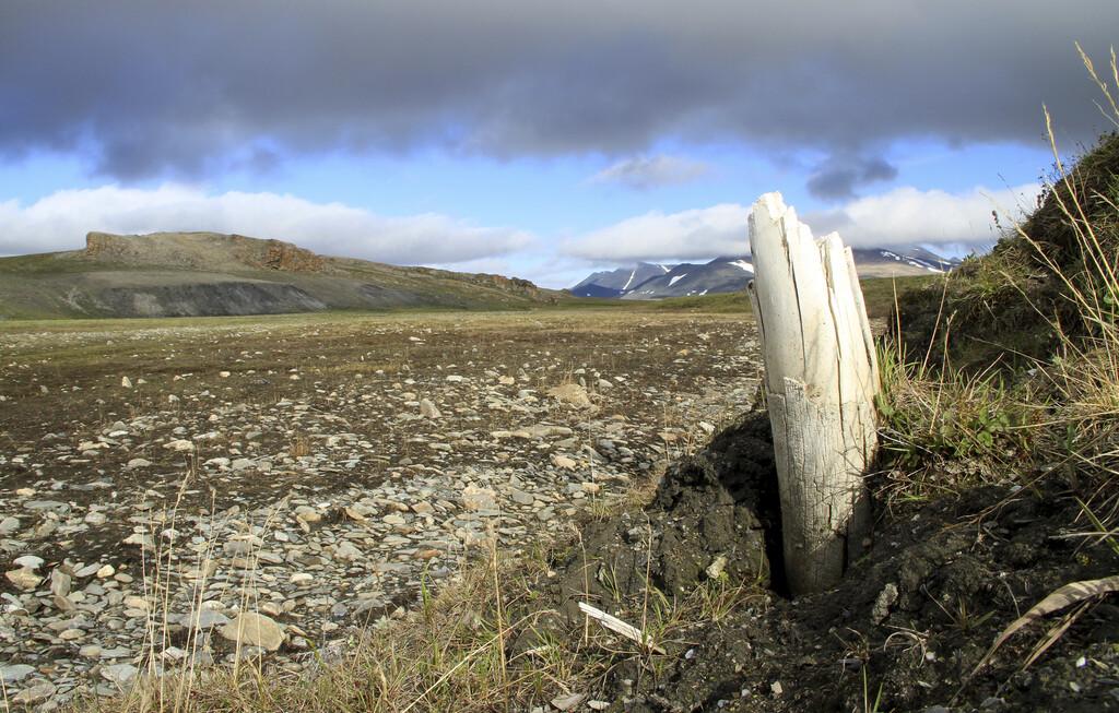 Eso no es un árbol, es un colmillo de mamut y tiene miles de años: la historia de uno de los ADNs más antiguos que hemos sido capaces de recuperar