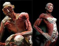 Bodies, el cuerpo humano al descubierto