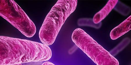 La salud de personas obesas determinada por su flora intestinal