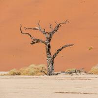 Los árboles están creciendo y muriendo más rápido, y por eso pronto almacenarán menos carbono