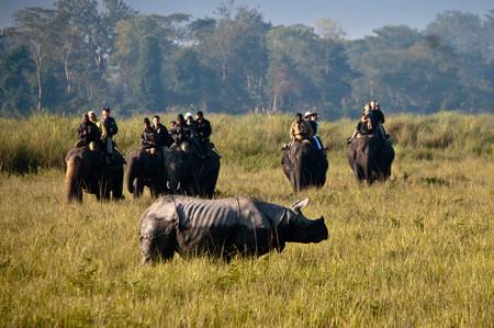 En la India tienen un plan para evitar la extinción de lo rinocerontes: matar a los cazadores furtivos