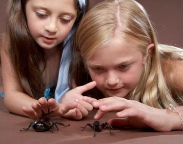 El vídeo de la bebé que no tiene miedo de una araña (gigante)