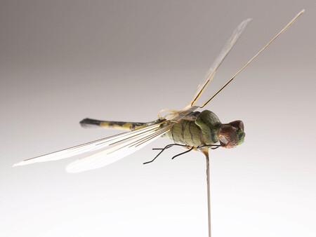 El primer insecto volador robótico se desarrolló en la década de 1970, pero era demasiado frágil