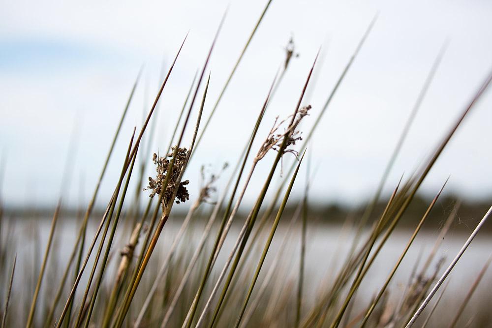 Foto de Canon EF 100-400mm f/4,5-5,6L IS II USM (7/10)