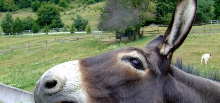 ¿La medicina tradicional china podría extinguir a los burros?