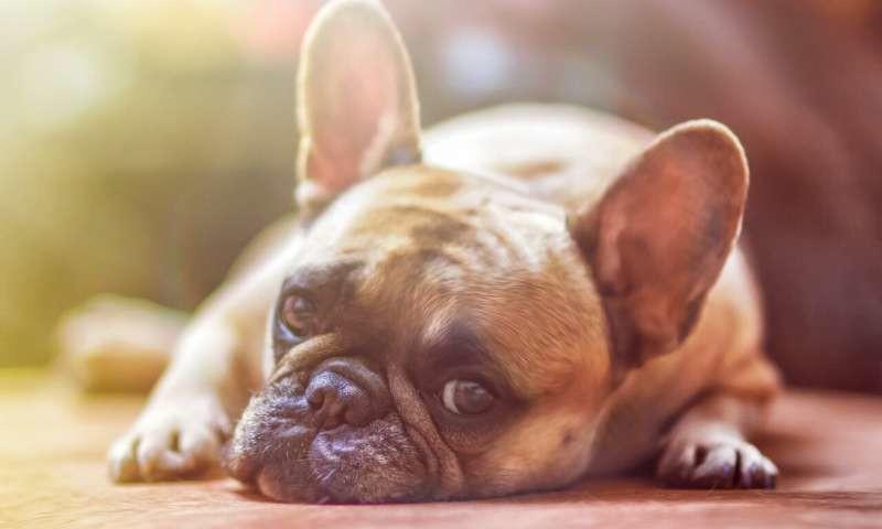 Los niños tienen más facilidad para el desarrollo socioemocional si tienen perro en casa