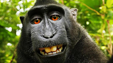 Sourcefed 3082 Wikipedia Refuses To Remove Monkey Selfie Large Thumb