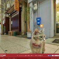 Nace en Japón un Street View para gatos: el turismo desde una perspectiva felina