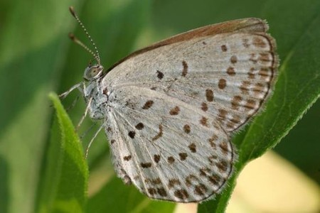Lo que le pasa a las mariposas que se alimentan de plantas contaminadas por Fukushima