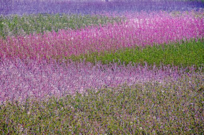 Floracion 32