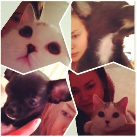Irina gatos perros