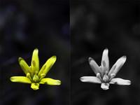 Truco express: sencillo método para conseguir un blanco y negro de alto contraste