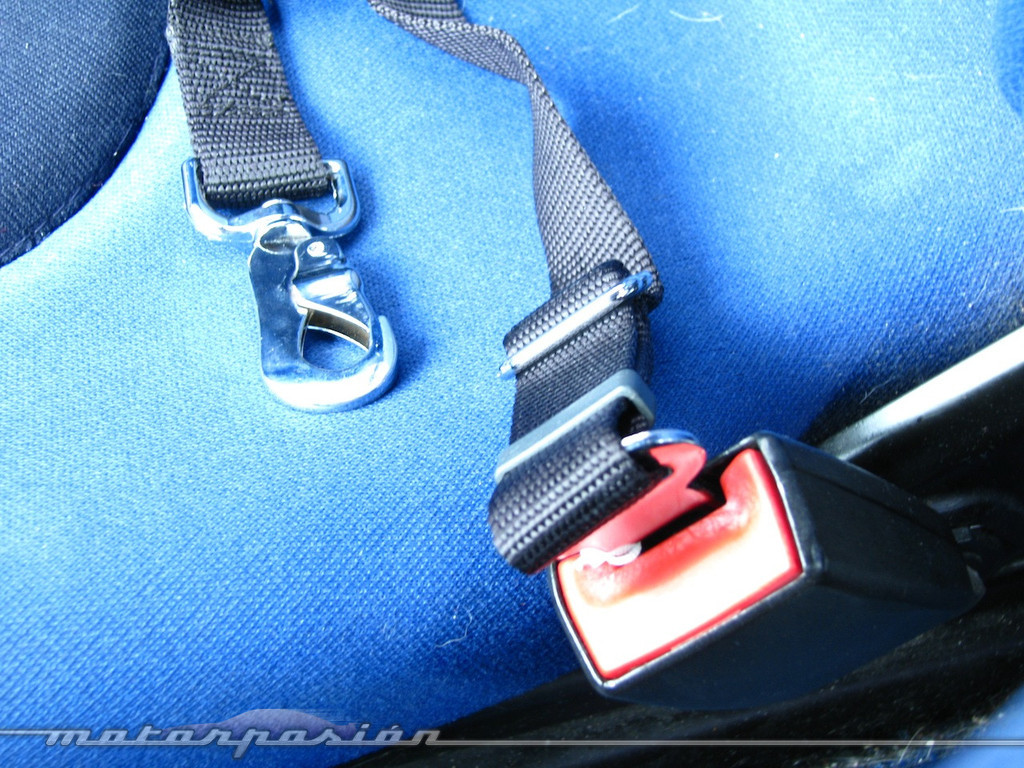 Foto de Transporta correctamente a tu mascota (7/11)