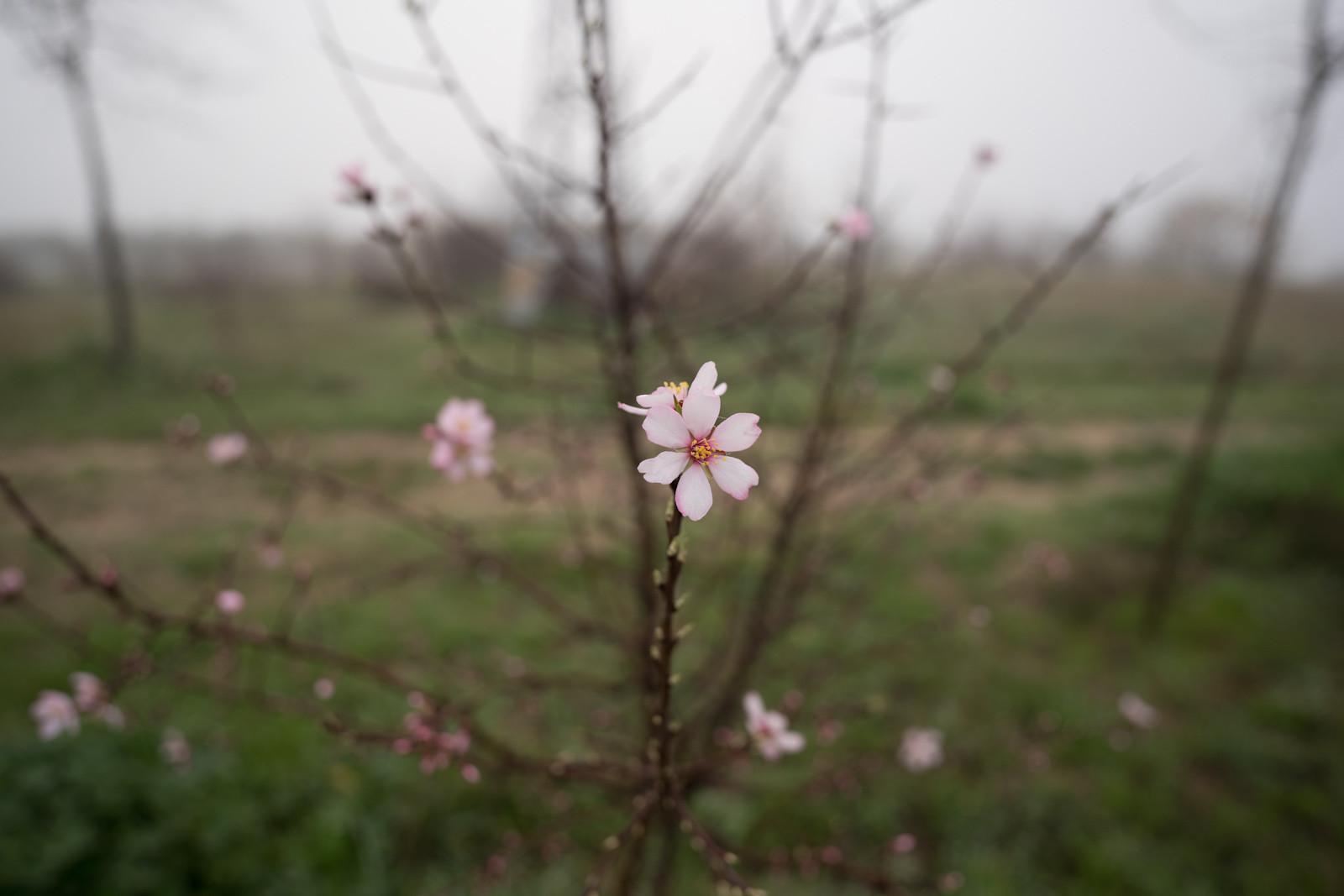 Foto de Galería muestras Sony 20 mm F1.8 G (62/66)