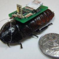 Algún día una cucaracha cyborg podrá salvarte la vida