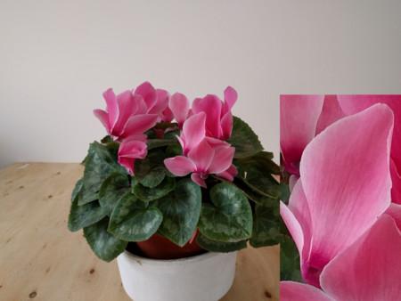 Nexus 6p Flor